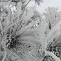 雪景-雾凇