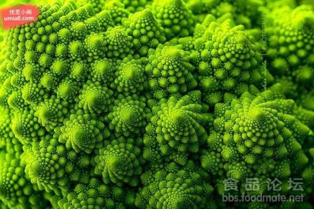 宝塔花菜 (romanesco broccoli)