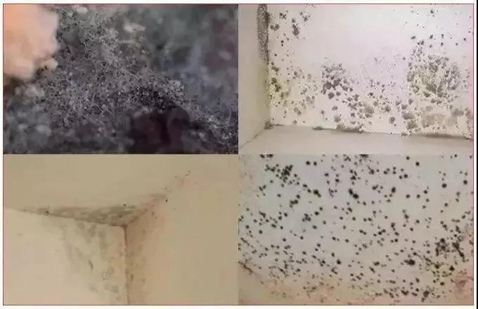 生产车间墙壁霉菌超标