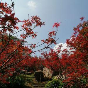 7 帽峰山上红枫红.jpg