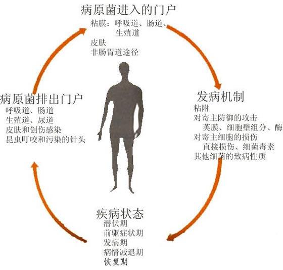 微生物的致病要素.jpg