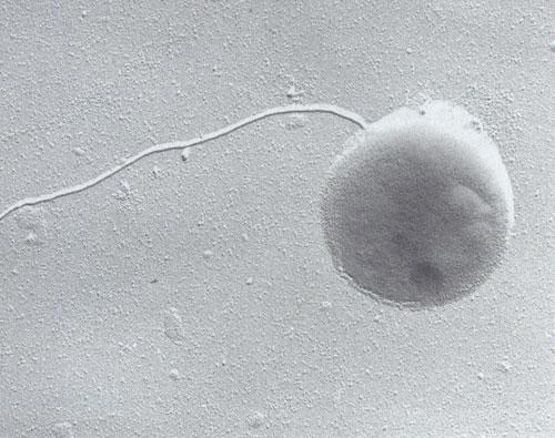不规则形状的古生菌