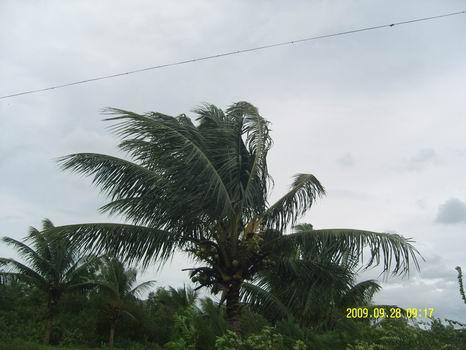风中的椰子树.jpg