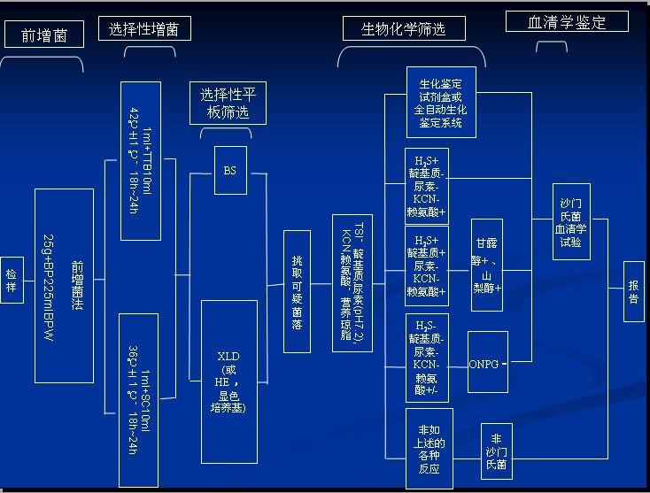 沙门氏菌流程.jpg
